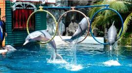 (*)Yunus Parklarını Neden İstemiyoruz ?WHY DON'T WE WANT DOLPHINARIUMS AND SEA WORLD PARKS ?